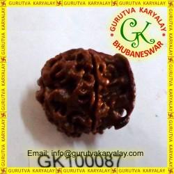 20-21 MM Nepali Ganesha Rudraksh Beads