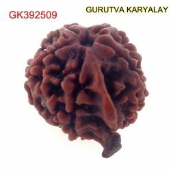 22.02 MM Nepali Ganesha Rudraksh Beads