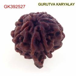 22.04 MM Nepali Ganesha Rudraksh Beads