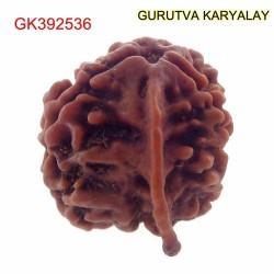 19.72 MM Nepali Ganesha Rudraksh Beads