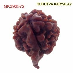 21.47 MM Nepali Ganesha Rudraksh Beads