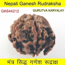 20.08 MM Nepali Ganesha Rudraksh Beads