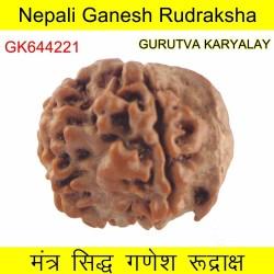 19.63 MM Nepali Ganesha Rudraksh Beads
