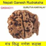 24.85 MM Nepali Ganesha Rudraksh Beads