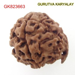 22.42 MM Nepali Ganesha Rudraksh Beads