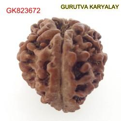 22.82 MM Nepali Ganesha Rudraksh Beads